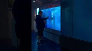 Virtual Shark Tank