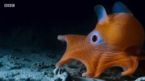 Blue Planet II Squid