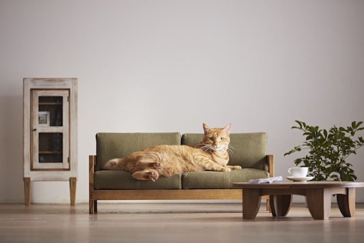 Ad Campaign Touts the Beauty of Handcrafted Japanese Furniture With Pieces Made Just for Cats