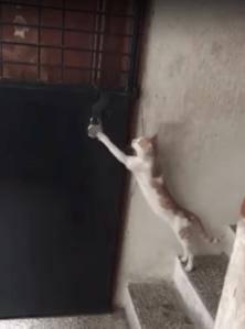 Cat Knocking on Door