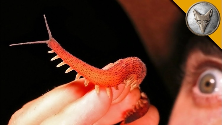 Coyote Peterson Builds a Mini Planet Earth Set to Feature a Very Rare and Beautiful Red Velvet Worm