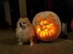 Dog-O-Lantern