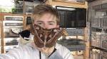 Giant Atticus Moth