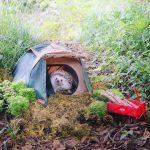 Hedgehog Azuki Camping Coleman