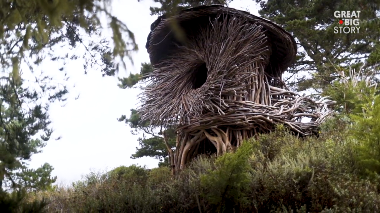 California Artist Weaves Incredible Human Sized Nests Out of Invasive Eucalyptus Trees