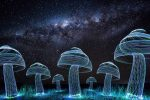 Light Mushrooms