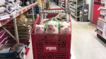 Quartet of Pigs and Pug