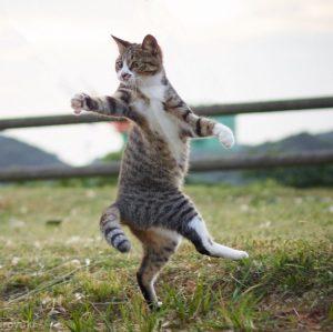 Tai Chi Cat