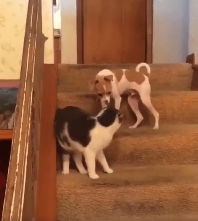 Cat Pressed Dog Turbo Button