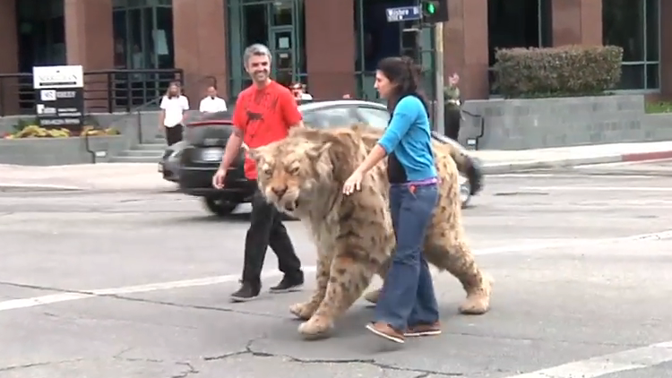 A Saber-Toothed Cat Walks Across Wilshire Blvd in Los Angeles to the La Brea Tar Pits Museum