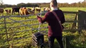 Bass and Cows