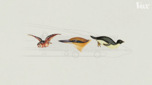 Birds Bullet Train