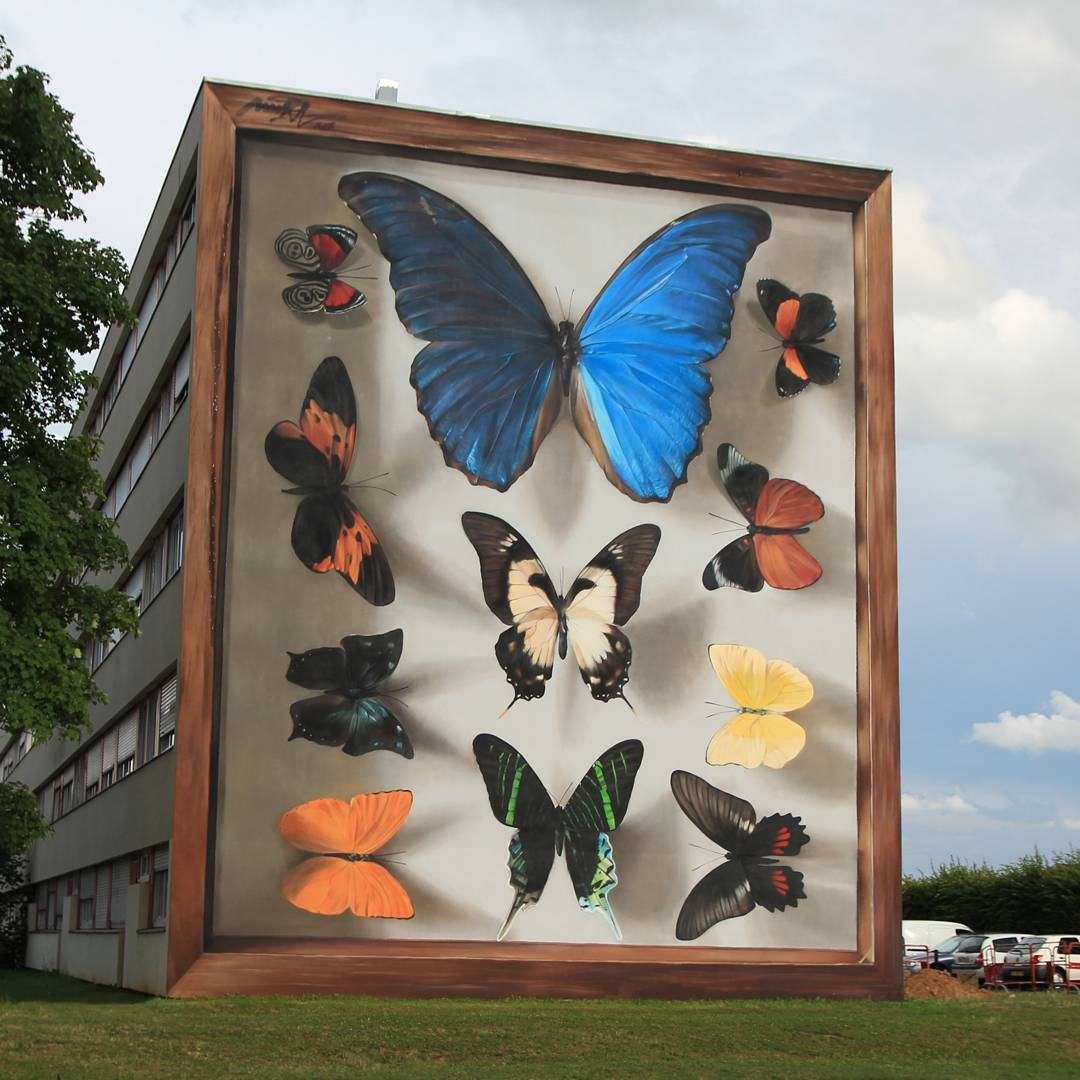 Gorgeous Hyper-Realistic Butterfly Specimen Case Murals Painted Freehand Onto Sides of Buildings