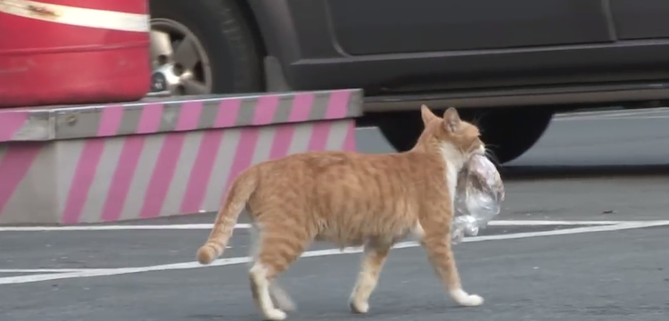 Rescuers Follow a Homeless Cat to Understand Why She Takes Her Food With Her in a Doggie Bag