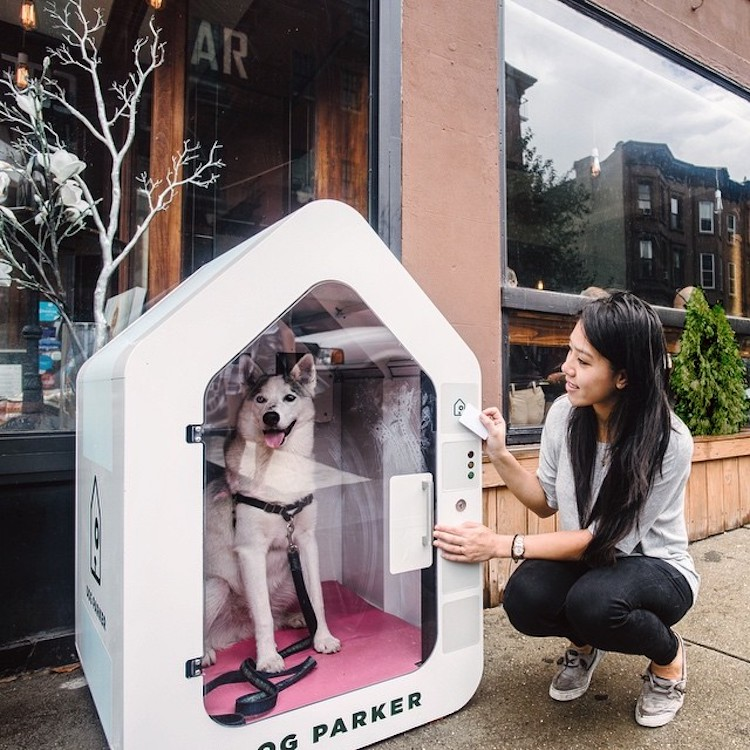 Dog Parker, Safe Clean Structures Where Dogs Can Comfortably Wait While Their Humans Shop