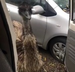 Eemie Emu