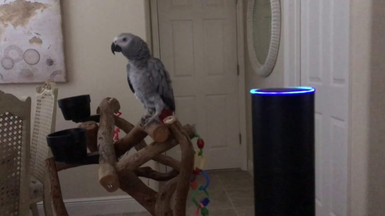 A Vocal African Grey Parrot Hilariously Instructs Her Amazon Echo to Turn On the Lights in the Room