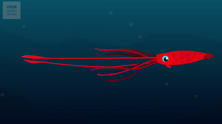 interesting facts about the elusive giant squid