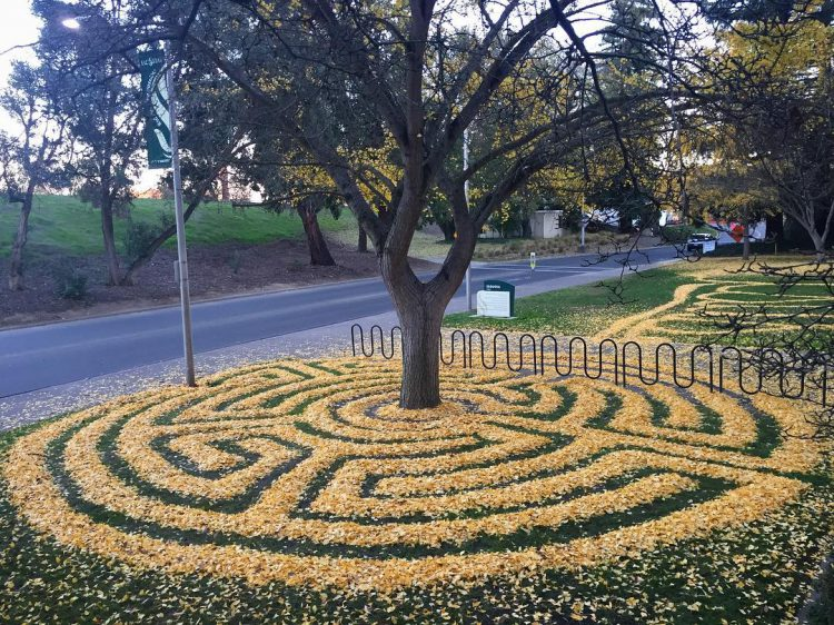 College Student Creates Gorgeous Geometric Ground Designs Using Fallen Gingko Leaves