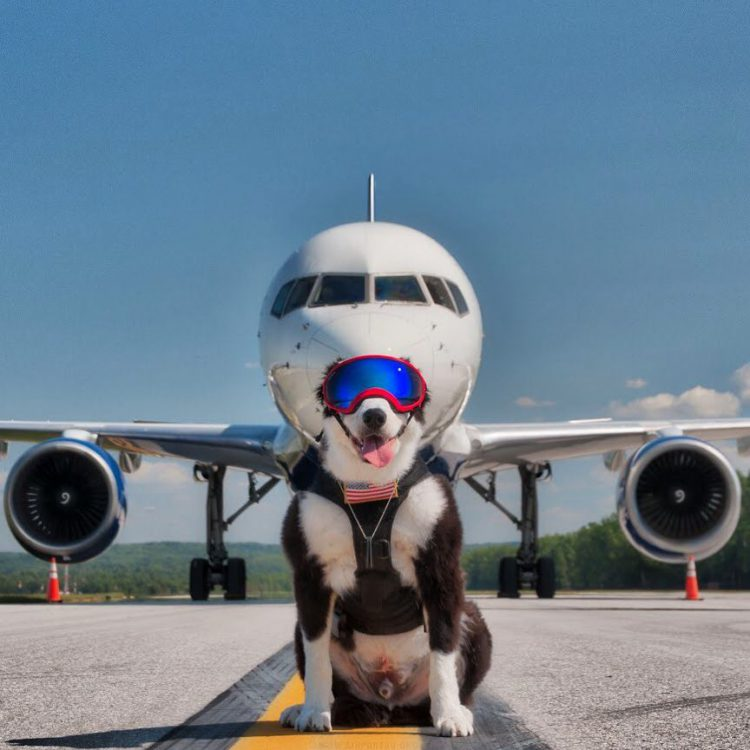 Hardworking Dog Gleefully Clears Birds From Airport Runways in Order to Prevent Aircraft Bird Strikes