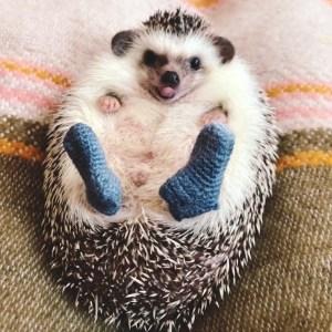 Mr Pokee Hedgehog New Blue Socks