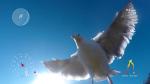 Seagull Drone