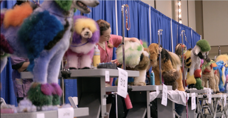 Well Groomed, A Fascinating Film About the Vivid World of Competitive Creative Dog Grooming