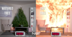 What Could Happen If a Fire Starts in a Watered Christmas Tree vs. A Dry Christmas Tree
