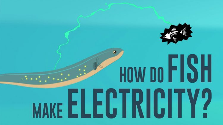 How and Why Certain Fish Have the Ability to Generate Their Own Electricity