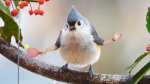 A Hilarious Compilation of Real Birds With Wacky Arms