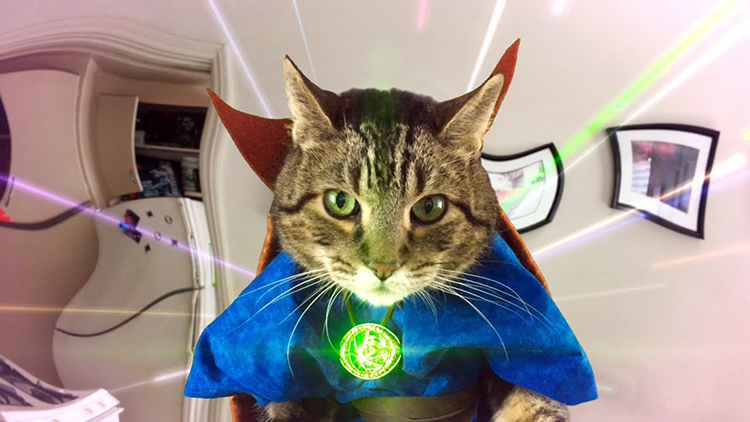 Benedict CumberCat Takes Their Human to Another Realm in a Mind-Bending Doctor Stranger Parody