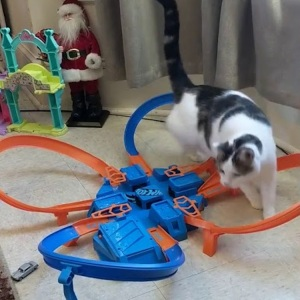 Cat Chasers Hot Wheels Car