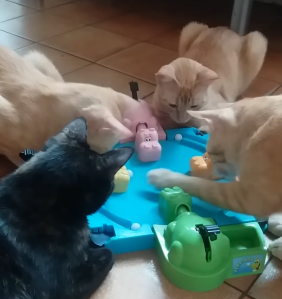 Cats Playing Hungry Hungry Hippo