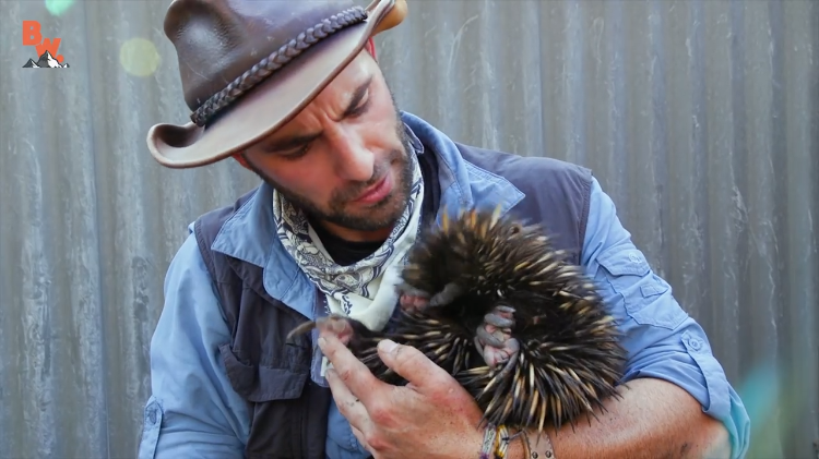 Coyote Peterson Digs a Shy Echidna Out From the Ground to Give the Spiky Mammal a Good Cuddle