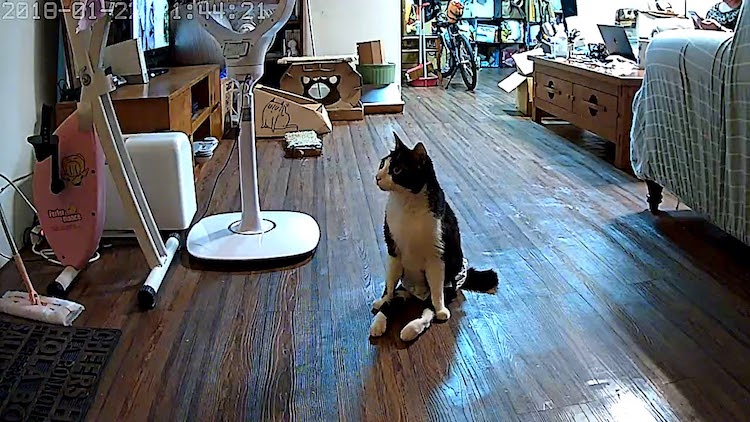 A Disabled Cat Excitedly Scoots to the Door to Greet His Human As Soon as He Hears Him in the Hallway