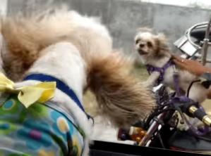 Dog Road Rage