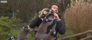 Lemurs BBC Reporter