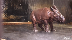 Rhino Showering