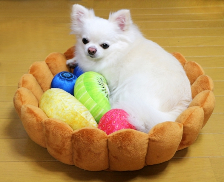 Small Dog in Fruit Tart