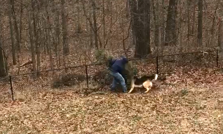 Two Playful Dogs Hilariously Refuse to Let Their Human Throw Away the Christmas Tree