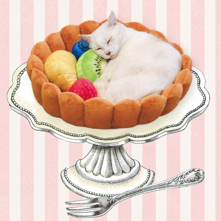 White Cat in Tart Bed