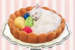 White Cat in Tart Bed