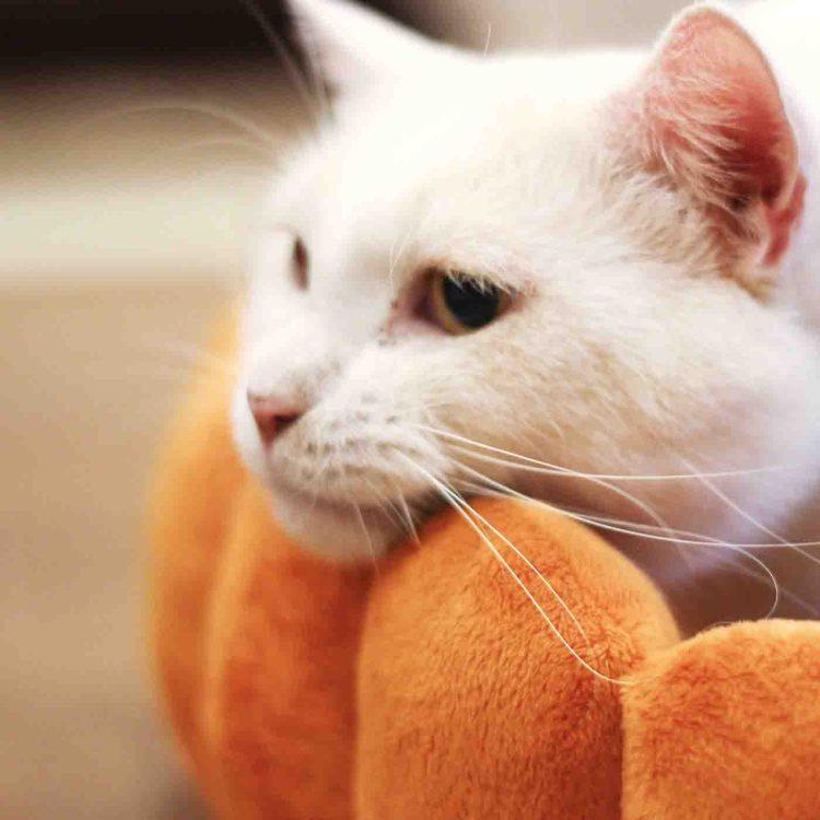 White Cat Peeking Over