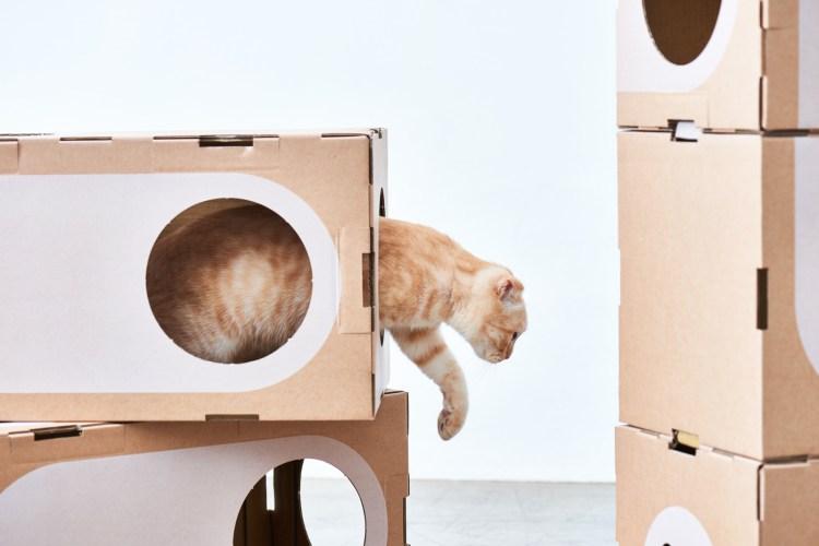 A Cat Thing Modular