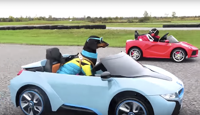 Crusoe the Celebrity Dachshund and Brother Oakley Race Each Other Around a Track In Little Sports Cars
