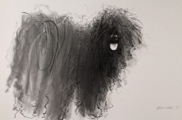 Gorgeous Pencil and Ink Portraits That Capture the Adorable Messiness of Curly Haired Dogs