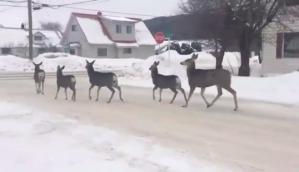 Deer at Stop Sign