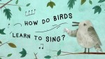 How Do Birds Learn to Sing