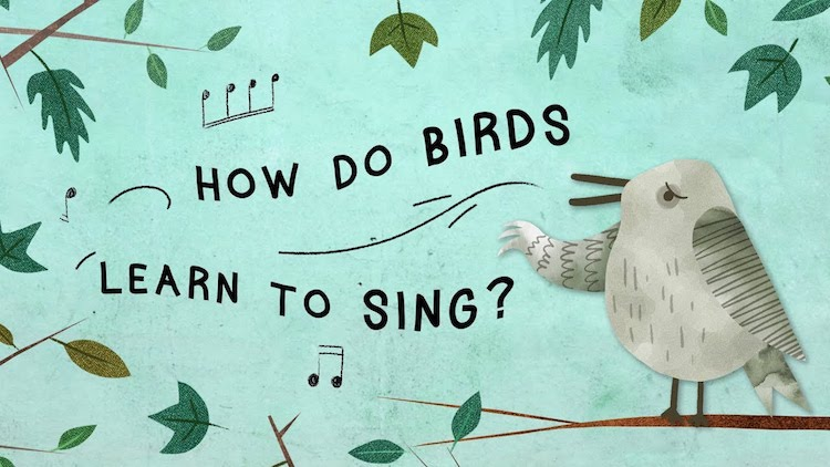 Studio 360: How Does a Song Bird Learn How to Sing?