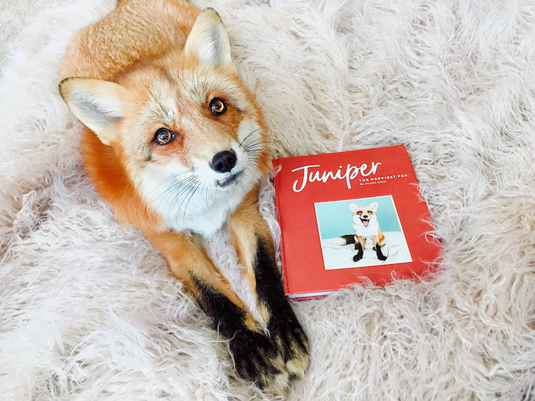 Juniper The Happiest Fox A Beautiful Picture Book About